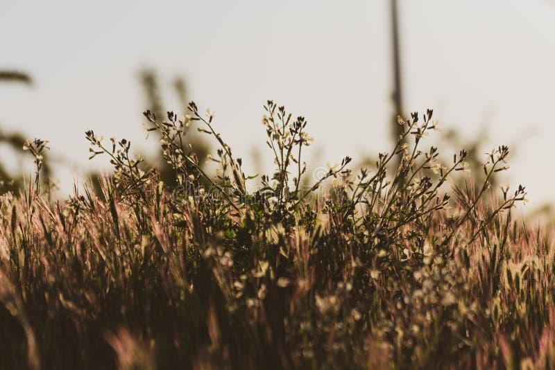 Άγρια λουλούδια στον τομέα σε ένα χρυσό ηλιοβασίλεμα άνοιξη o o στοκ φωτογραφία με δικαίωμα ελεύθερης χρήσης