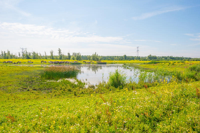 Άγρια λουλούδια κατά μήκος μιας λίμνης το καλοκαίρι στοκ φωτογραφίες με δικαίωμα ελεύθερης χρήσης