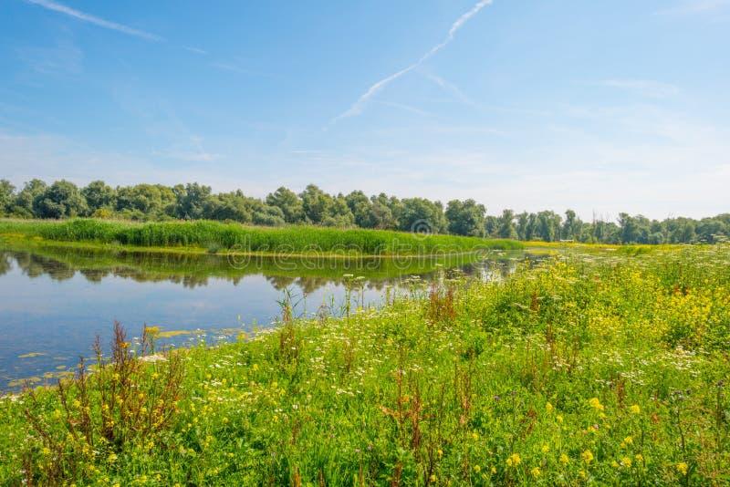 Άγρια λουλούδια κατά μήκος μιας λίμνης το καλοκαίρι στοκ εικόνες