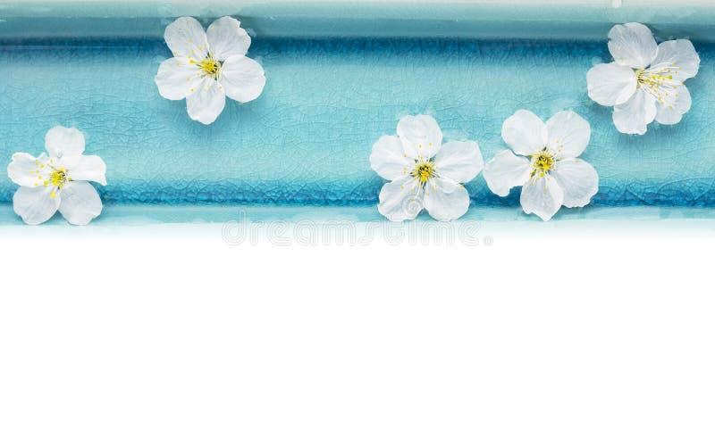 Άγρια λουλούδια κερασιών στο μπλε κύπελλο με το νερό, που απομονώνεται στοκ εικόνες με δικαίωμα ελεύθερης χρήσης