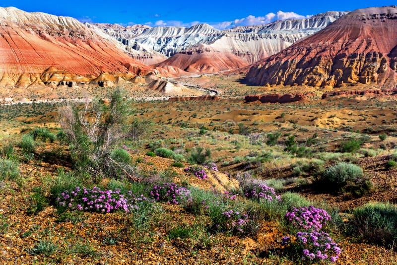 Άγρια λουλούδια στην έρημο σε ένα υπόβαθρο των πολύχρωμων βουνών και του νεφελώδους ουρανού στοκ φωτογραφία με δικαίωμα ελεύθερης χρήσης