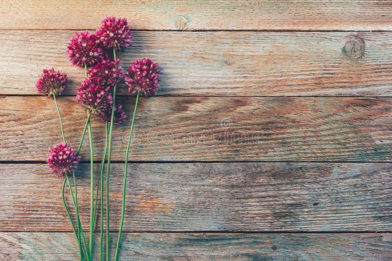 Άγρια λουλούδια Allium σε ένα ξύλινο εκλεκτής ποιότητας υπόβαθρο στοκ εικόνες