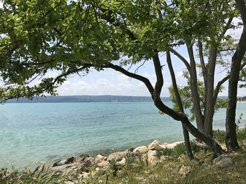 Άγρια παραλία με το πράσινο δέντρο στοκ εικόνες