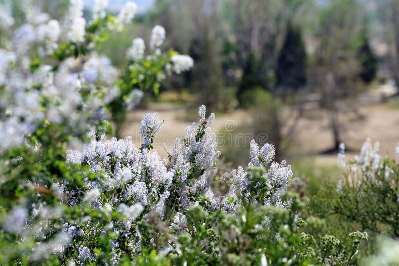 Άγρια πασχαλιές και λουλούδια βουνών στοκ φωτογραφία
