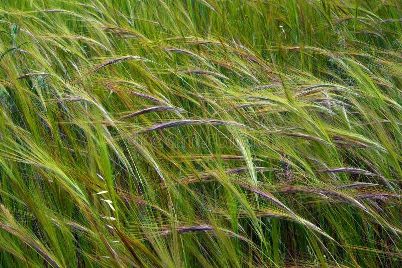 άγρια περιοχές ακίδων στοκ φωτογραφία με δικαίωμα ελεύθερης χρήσης