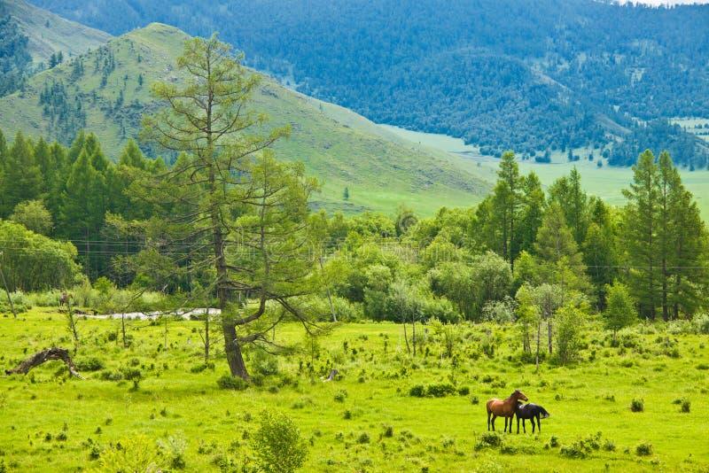άγρια περιοχές αλόγων στοκ φωτογραφία με δικαίωμα ελεύθερης χρήσης