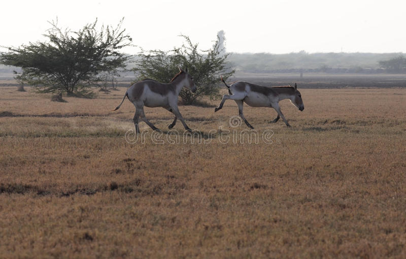 άγρια περιοχές γαιδάρων στοκ φωτογραφία με δικαίωμα ελεύθερης χρήσης