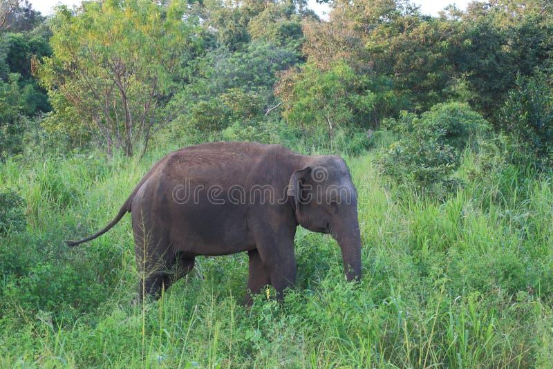 άγρια περιοχές ελεφάντων στοκ εικόνες με δικαίωμα ελεύθερης χρήσης