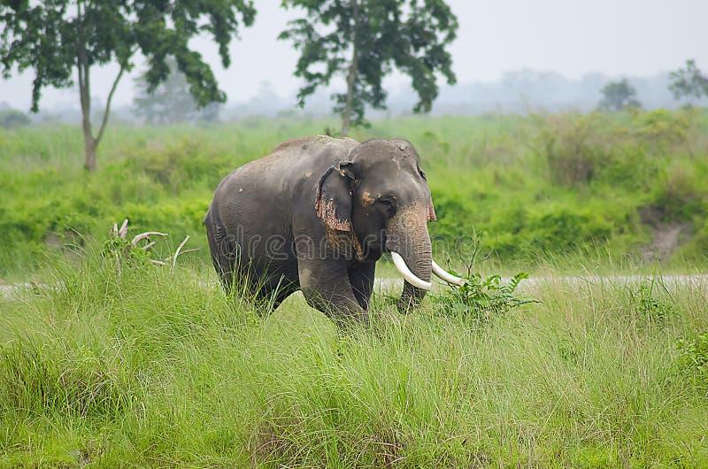 άγρια περιοχές ελεφάντων στοκ φωτογραφία με δικαίωμα ελεύθερης χρήσης