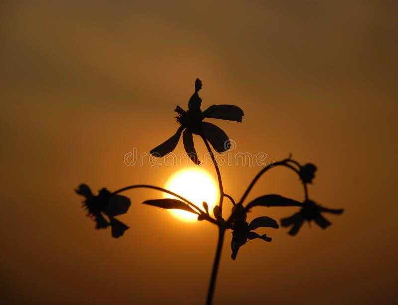 άγρια περιοχές ηλιοβασιλέματος λουλουδιών στοκ φωτογραφίες με δικαίωμα ελεύθερης χρήσης