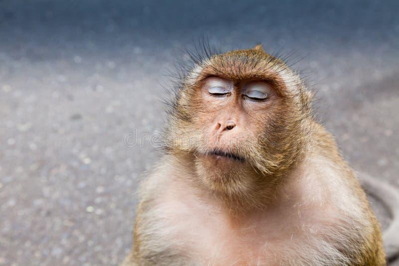 Άγρια περιοχές καβούρι-που τρώνε macaque στοκ εικόνες με δικαίωμα ελεύθερης χρήσης