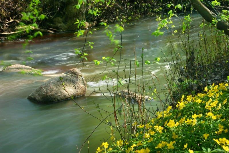 άγρια περιοχές κολπίσκο&up στοκ εικόνα