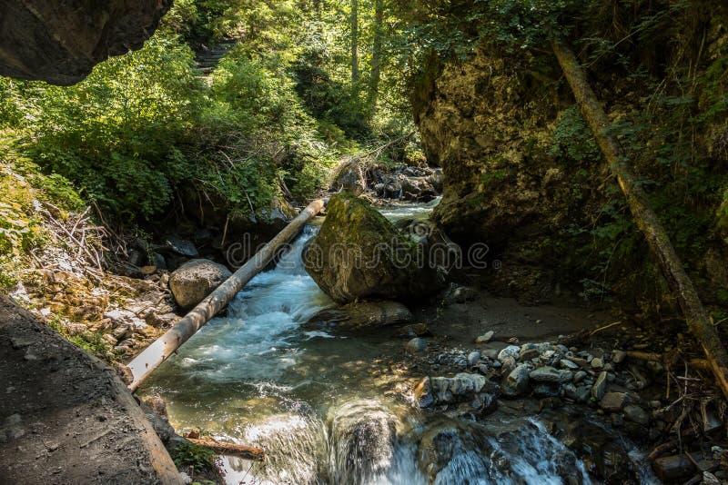 άγρια περιοχές κολπίσκο&up στοκ φωτογραφίες με δικαίωμα ελεύθερης χρήσης