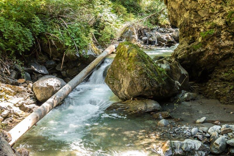 άγρια περιοχές κολπίσκο&up στοκ εικόνα με δικαίωμα ελεύθερης χρήσης