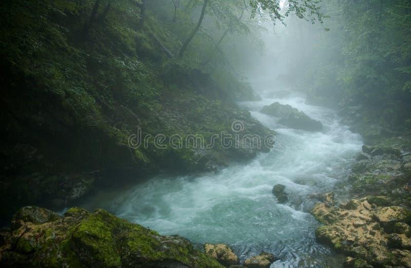 άγρια περιοχές κολπίσκο&up στοκ εικόνες