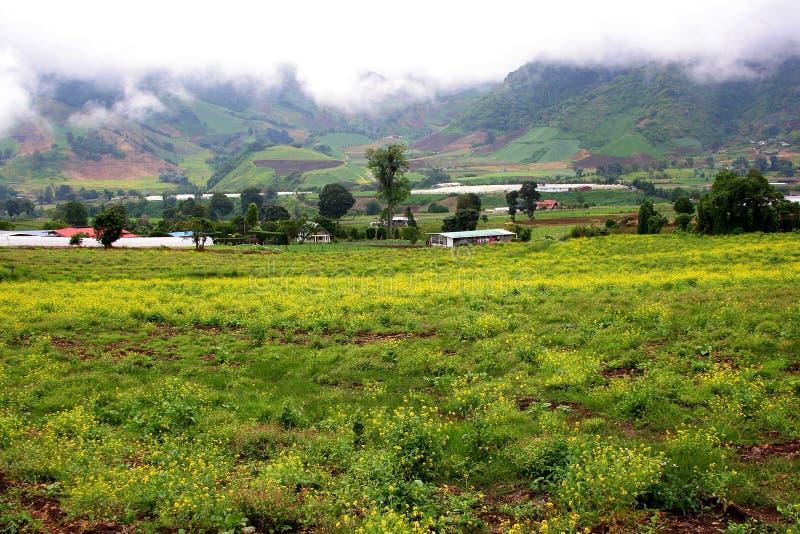 άγρια περιοχές λουλουδιών πεδίων στοκ φωτογραφία με δικαίωμα ελεύθερης χρήσης