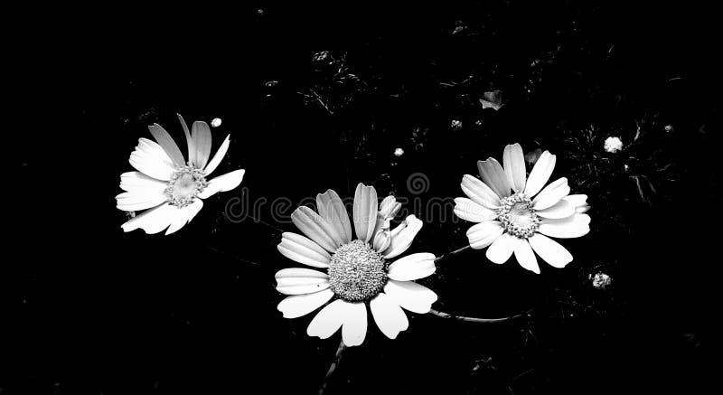 άγρια περιοχές λουλου&de διανυσματική απεικόνιση