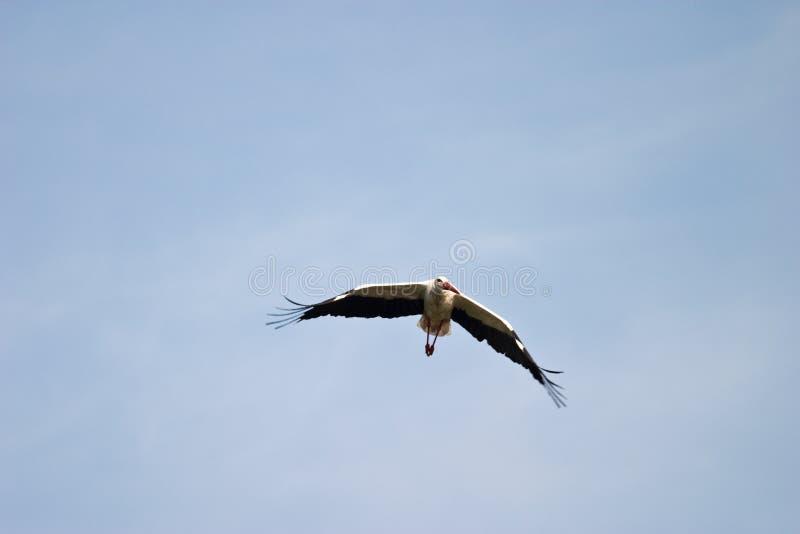 άγρια περιοχές πουλιών στοκ φωτογραφία με δικαίωμα ελεύθερης χρήσης
