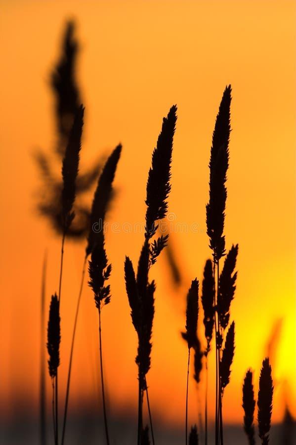 άγρια περιοχές σκιαγραφ&iot στοκ εικόνα με δικαίωμα ελεύθερης χρήσης