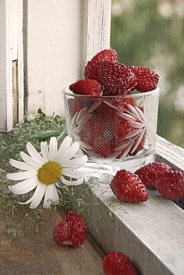 Download άγρια περιοχές φραουλών ζ στοκ εικόνες. εικόνα από κόκκινος - 17051200