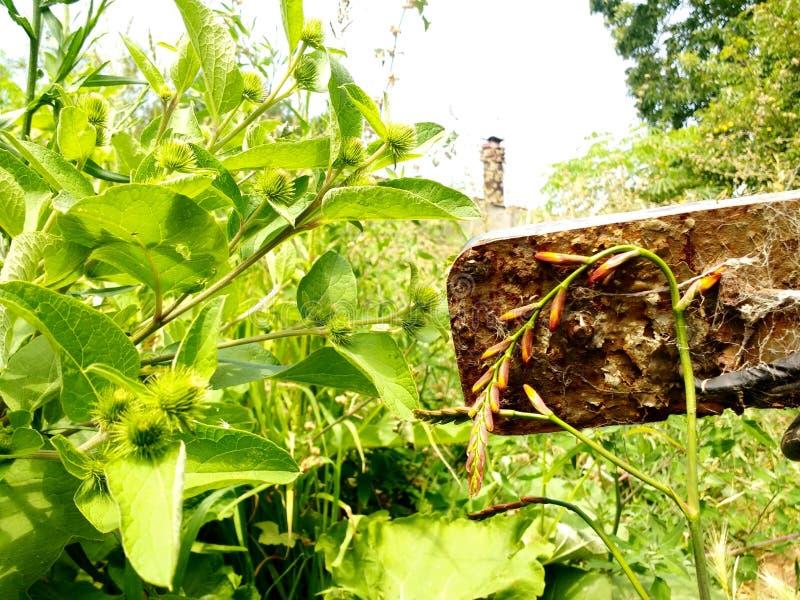 άγρια περιοχές φυτών στοκ φωτογραφία