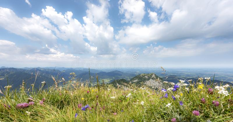 άγρια περιοχές χορταριών στοκ εικόνα με δικαίωμα ελεύθερης χρήσης