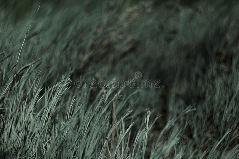 άγρια περιοχές χλόης στοκ φωτογραφία με δικαίωμα ελεύθερης χρήσης