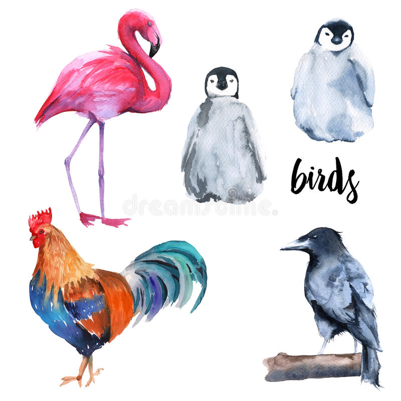 Άγρια πουλιά καθορισμένα Penguin, κόρακας, φλαμίγκο, κόκκορας Στην άσπρη ανασκόπηση ελεύθερη απεικόνιση δικαιώματος