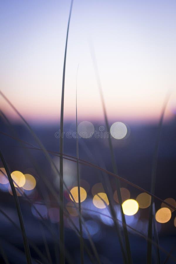 Άγρια σκιαγραφία ηλιοβασιλέματος χλόης στοκ φωτογραφία με δικαίωμα ελεύθερης χρήσης