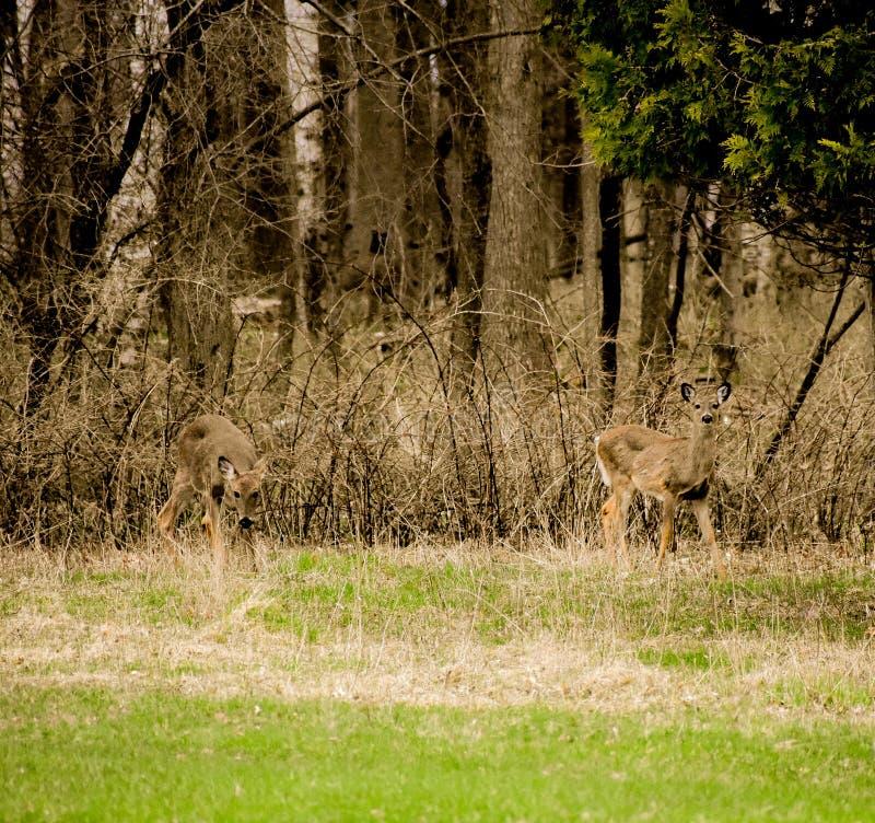 Άγρια φύση στο κρατικό πάρκο παραλιών Harrington στο Βέλγιο Ουισκόνσιν στοκ φωτογραφία με δικαίωμα ελεύθερης χρήσης