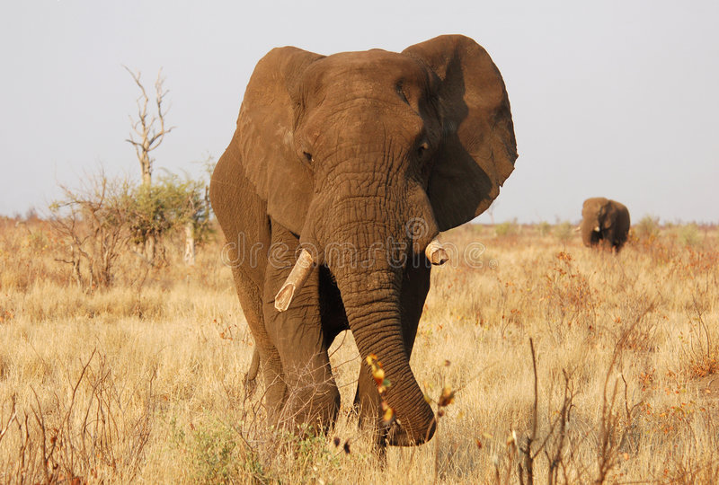 άγρια φύση της Αφρικής στοκ φωτογραφίες με δικαίωμα ελεύθερης χρήσης