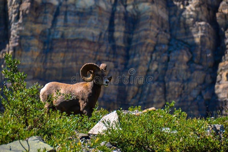 Άγρια φύση όπως βλέπει στο εθνικό πάρκο παγετώνων, Μοντάνα, ΗΠΑ στοκ εικόνα με δικαίωμα ελεύθερης χρήσης