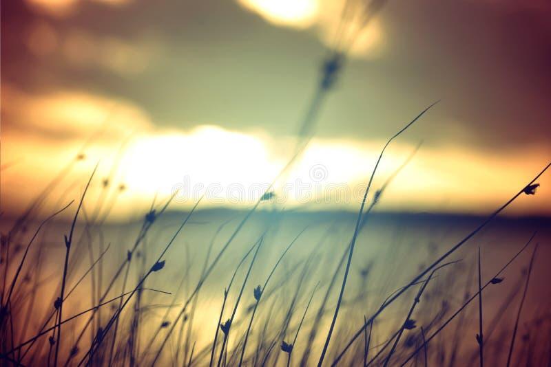 Άγρια χλόη στο εκλεκτής ποιότητας υπόβαθρο χρωμάτων θερινού ηλιοβασιλέματος στοκ εικόνες