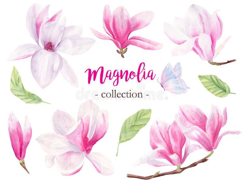 Άγριες απεικονίσεις ράστερ watercolor magnolia συρμένες χέρι καθορισμένες ελεύθερη απεικόνιση δικαιώματος