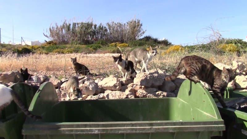 Άγριες γάτες φιλμ μικρού μήκους