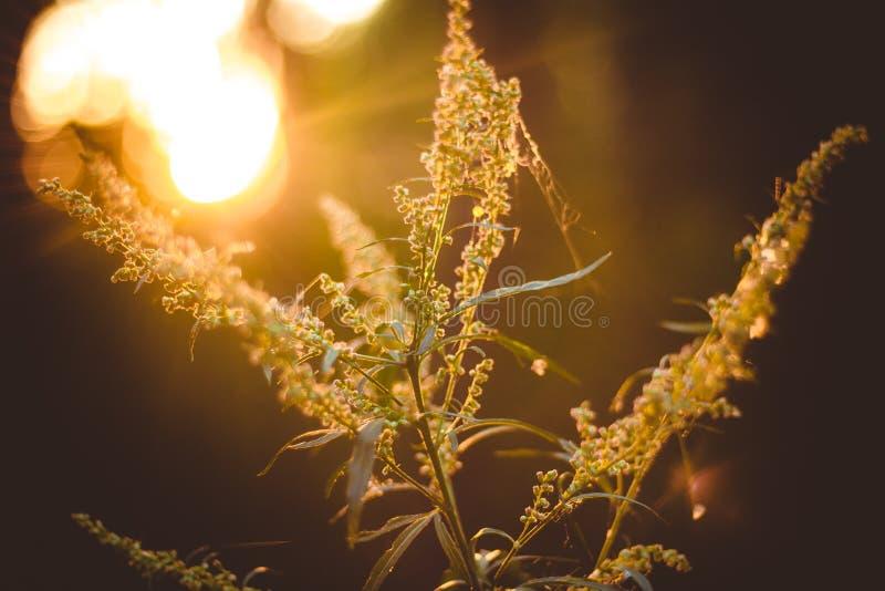 Άγριες εγκαταστάσεις στο δάσος ενάντια στο ηλιοβασίλεμα στοκ φωτογραφίες με δικαίωμα ελεύθερης χρήσης