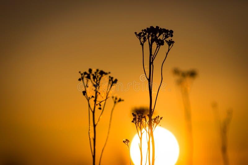 Άγριες εγκαταστάσεις στο υπόβαθρο ηλιοβασιλέματος στοκ εικόνα με δικαίωμα ελεύθερης χρήσης