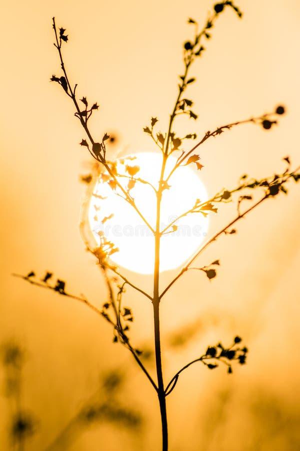 Άγριες εγκαταστάσεις χλόης στο ηλιοβασίλεμα στοκ φωτογραφίες με δικαίωμα ελεύθερης χρήσης