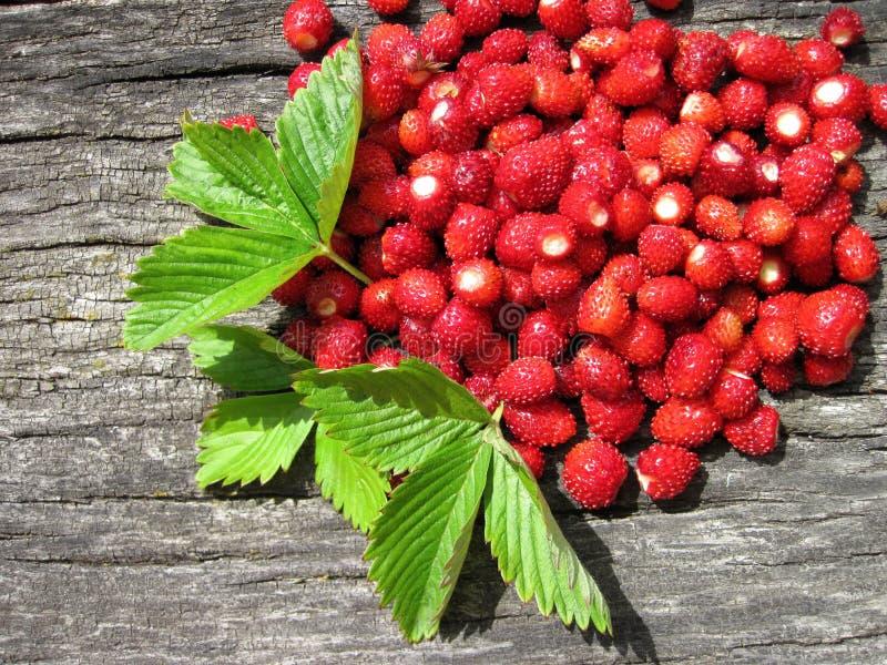 Άγριες φράουλες στοκ εικόνες με δικαίωμα ελεύθερης χρήσης