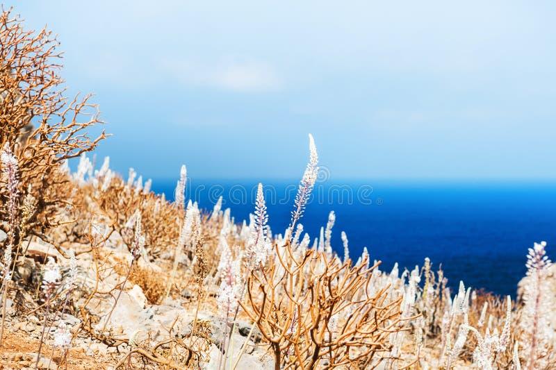 Άγριες χλόες στην παραλία στοκ εικόνες με δικαίωμα ελεύθερης χρήσης