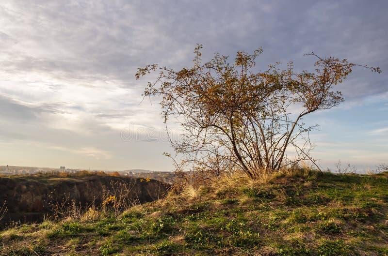 Άγριος αυξήθηκε εγκαταστάσεις στη βουνοπλαγιά στο ηλιοβασίλεμα φθινοπώρου στοκ φωτογραφία