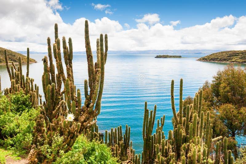 Άγριος κάκτος στη λίμνη Titicaca, Βολιβία στοκ εικόνα