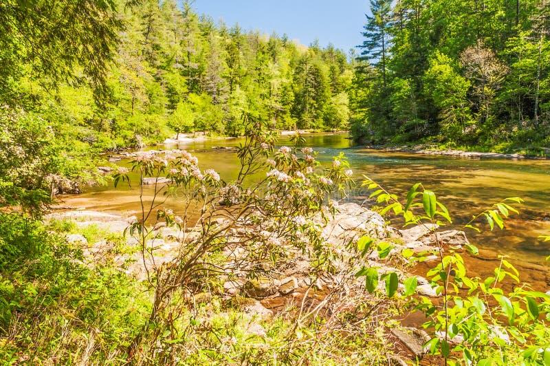 Άγριος και φυσικός ποταμός Chattooga στοκ φωτογραφία με δικαίωμα ελεύθερης χρήσης