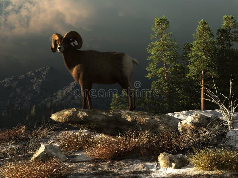 Άγριος κριός στα δύσκολα βουνά διανυσματική απεικόνιση