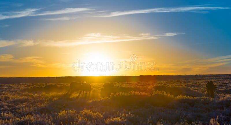 Άγριος φυσικός βρόχος αλόγων, Ουαϊόμινγκ στοκ εικόνα με δικαίωμα ελεύθερης χρήσης