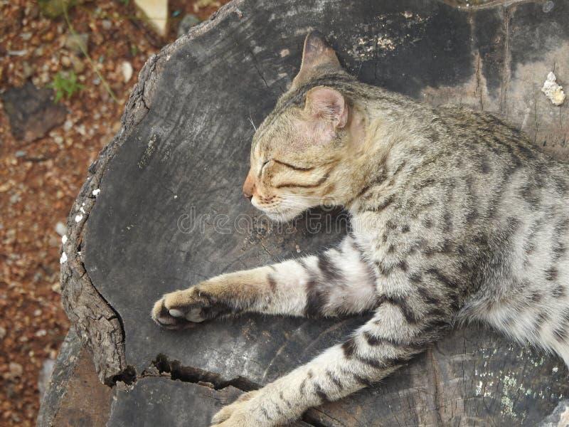 Άγριος ύπνος γατών σε μια ξύλινη γέφυρα στοκ εικόνα με δικαίωμα ελεύθερης χρήσης
