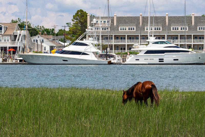 Άγριο άλογο στο νησί καρότων στοκ φωτογραφίες