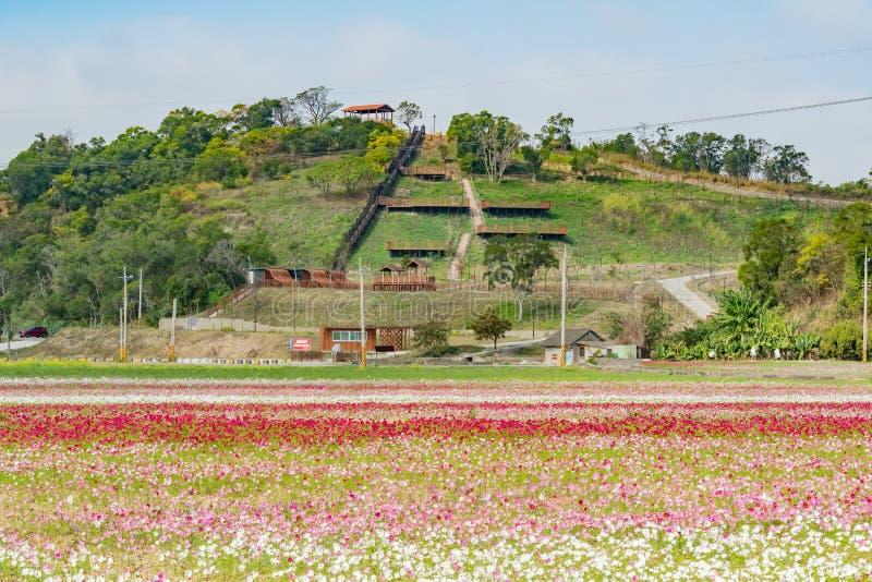Άγριο άνθος λουλουδιών κάτω από το ίχνος επιφυλακής Shanjiao στοκ φωτογραφία με δικαίωμα ελεύθερης χρήσης