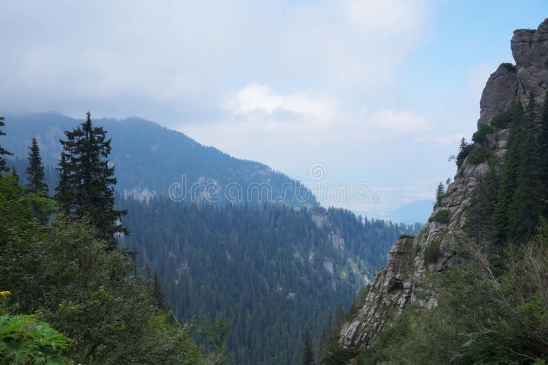Άγριο δάσος στη Ρουμανία στοκ φωτογραφίες