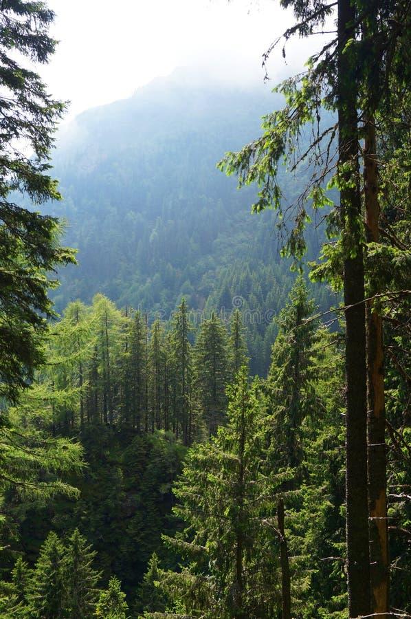 Άγριο δάσος στη Ρουμανία στοκ εικόνα